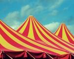 Još jedan naprednjački cirkus u Novom Sadu