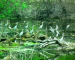 U pripremi ekološki zločin na levoj obali Dunava!