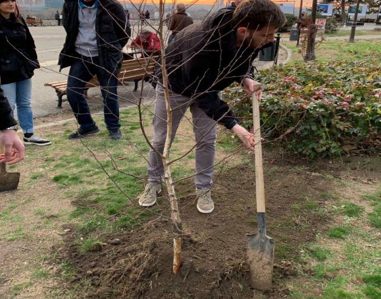 Forum mladih NOVE nastavlja akciju sadnje drveća na Kalemegdanu