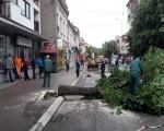 Naprednjački pipci sravnili sa zemljom drvored u Aleksincu