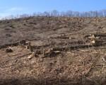 NOVA Zrenjanin upozorava na varvarsku seču šuma na Fruškoj gori