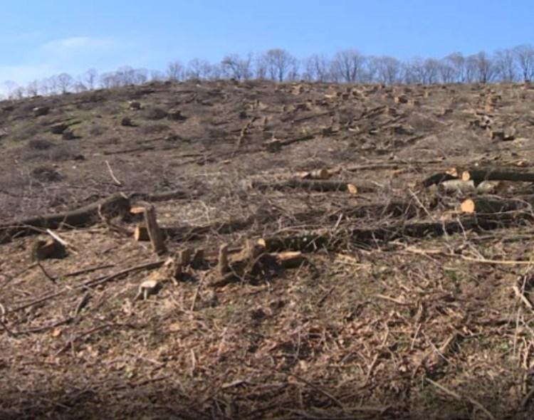 NOVA Zrenjanin upozorava: Sravnjene sa zemljom šume Srednjebanatskog okruga