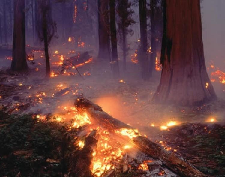 """NOVA Zrenjanin: """"Digitalna"""" Vlada ne vidi požare koji širom Srbije ugrožavaju životnu sredinu"""