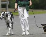 NOVA predlaže mere za bezbedno izvođenje ljubimaca u šetnju tokom trajanja policijskog časa